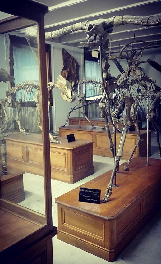 collection paléontologiques de l'Université Claude Bernard - Lyon 1